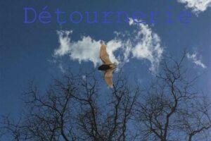 chauves-souris en vol