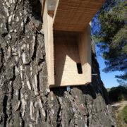 gite chauves-souris arboricole grand ouverture complète