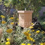 nichoir à abeilles sauvages