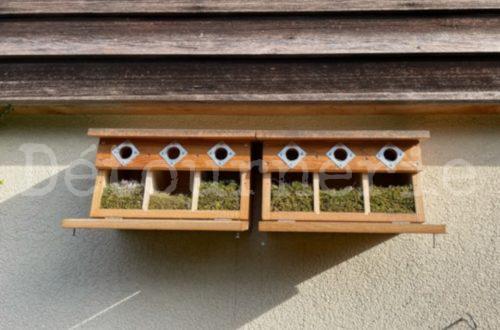 nichoir moineaux